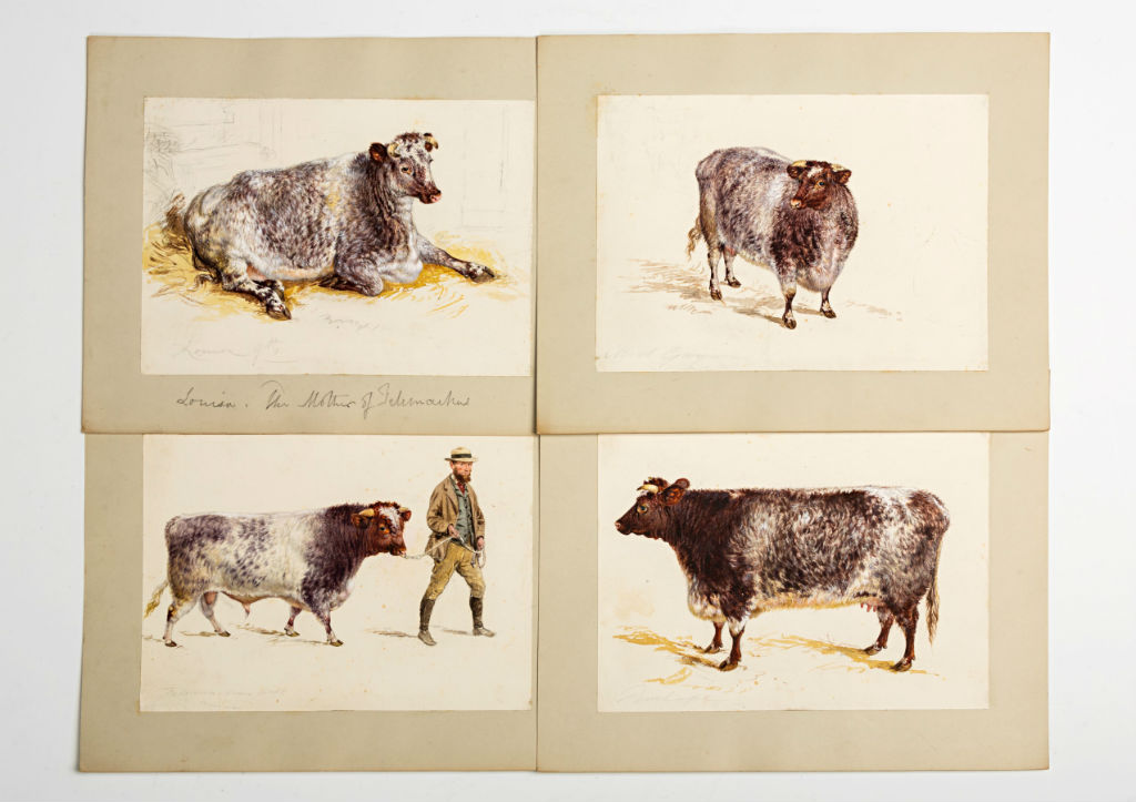 Four gouache sketches of prize dairy shorthorn cattle,19th Century.