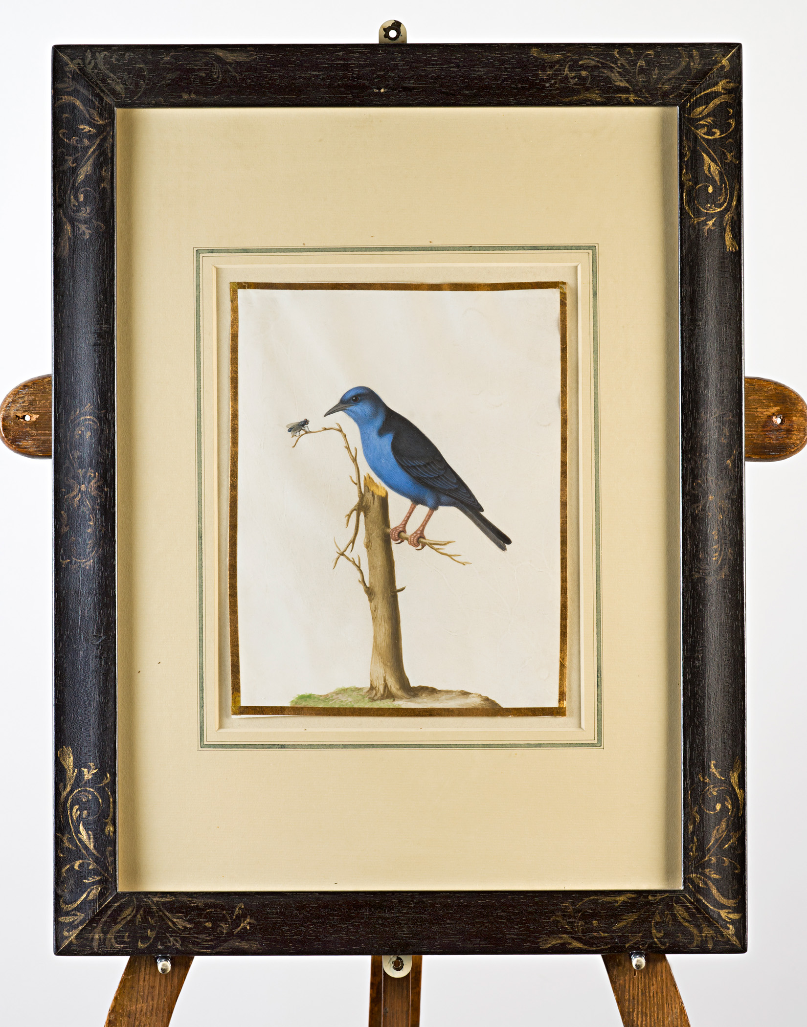 Bluebird and insect on branch, Attributed to Claude Aubriet (c.1665-1742).