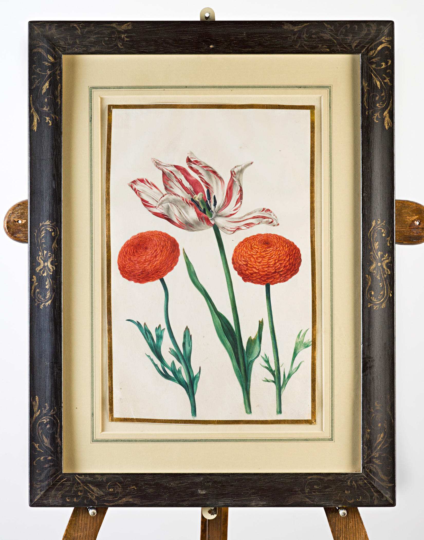 Tulip and zinnias, Attributed to Claude Aubriet (c.1665-1742).