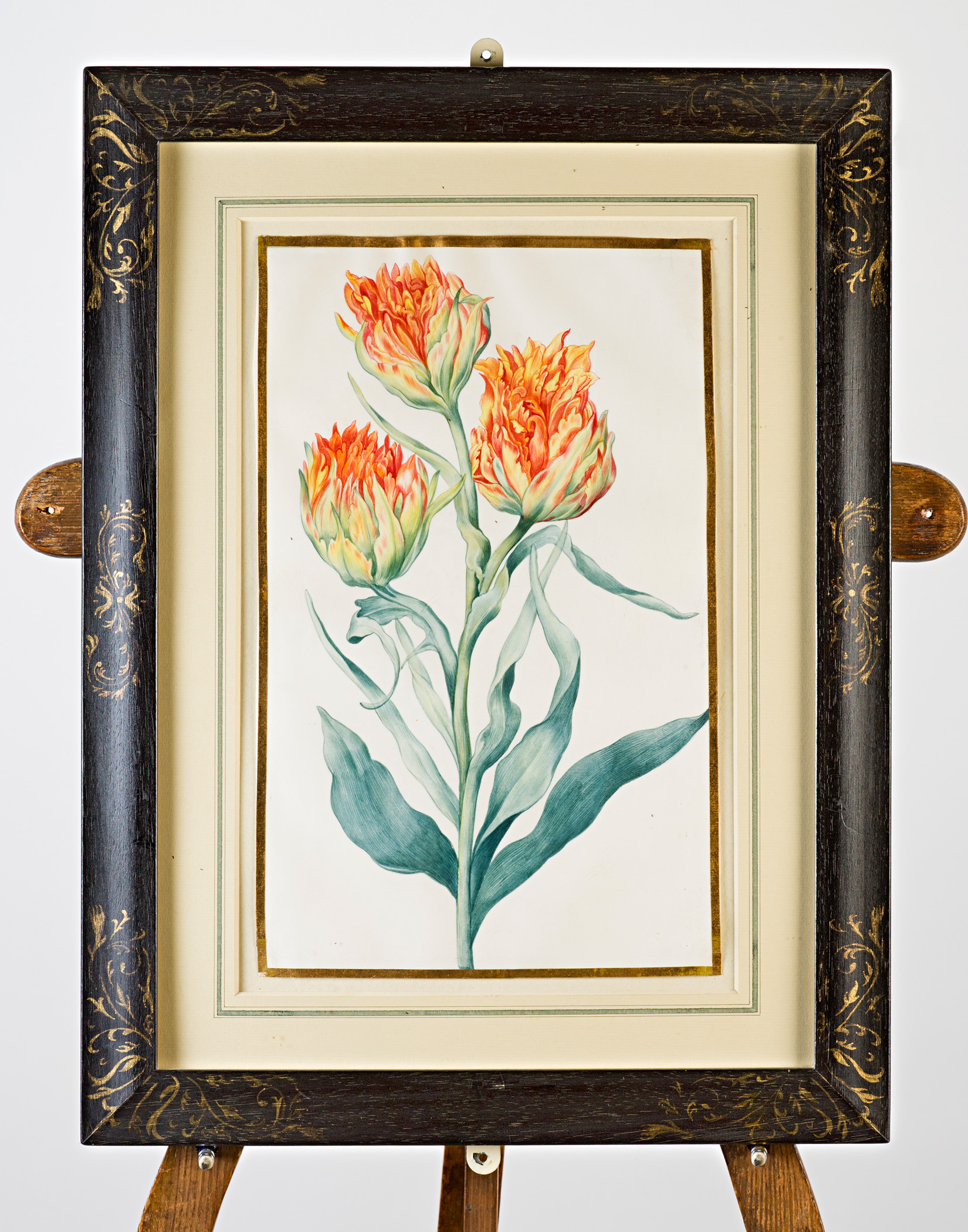 Three-headed orange and yellow tulip, Attributed to Claude Aubriet (c.1665-1742).