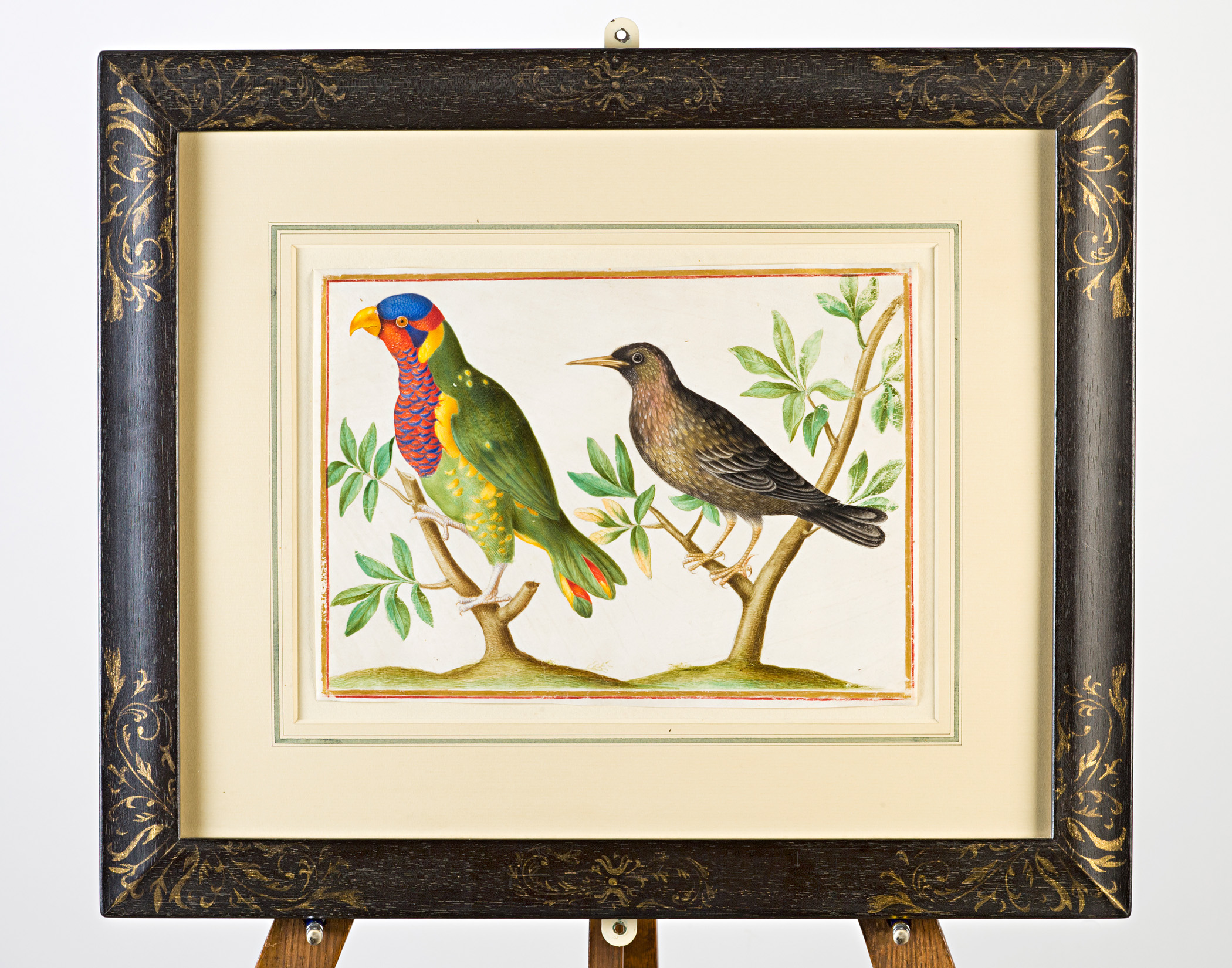 A multi-coloured parrot and starling on branches, Attributed to Claude Aubriet (c.1665-1742).